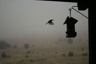 A bird heads for a feeder with a backdrop of fog.